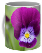 Viola Named Sorbet Plum Velvet Jump-up Coffee Mug