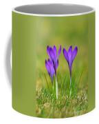 Trio Of Violet Crocuses Coffee Mug