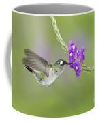 Violet-headed Hummingbird Coffee Mug