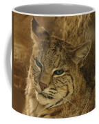 Wary Bobcat Coffee Mug by Penny Lisowski