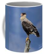 Watchful Eyes Crested Southern Caracara Coffee Mug