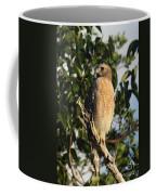 Watchful Eyes - Red Shouldered Hawk Coffee Mug