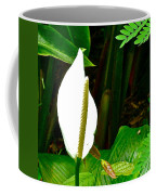 Water Arum In Park Across From Wat Phrathat Doi Suthep In Chiang Mai-thailand. Coffee Mug