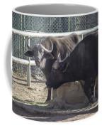 Water Buffalo - 2 Coffee Mug