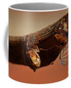 Water Drop On A Branch Coffee Mug