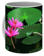 Water Lillies In Pink Coffee Mug