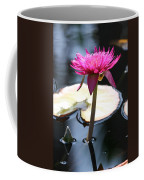 Pink Water Lily Coffee Mug