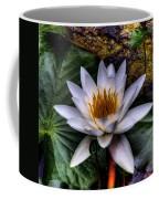 Water Lily Coffee Mug by David Patterson