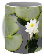 Water Lily I I Coffee Mug