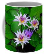 Water Lily IIi Coffee Mug