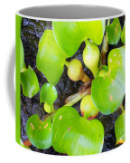 Water Plants 1 Coffee Mug