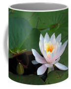 Water Star Coffee Mug