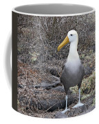 Waved Albatross Diomeda Irrorata Coffee Mug