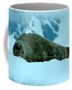 Weddell Seal Coffee Mug
