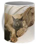 Weimaraner Asleep With Cat Coffee Mug