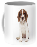 Welsh Springer Spaniel Dog Coffee Mug