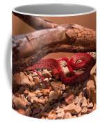 Western Coachwhip Red Phase Coffee Mug