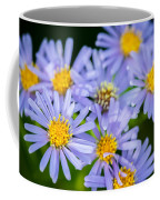 Western Daisies Asters Glacier National Park Coffee Mug