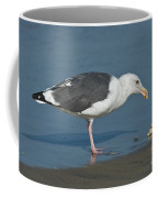 Western Gull Eating Clam Coffee Mug
