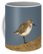 Western Sandpiper Calidris Mauri Coffee Mug