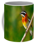 Western Spindalis Coffee Mug by Tony Beck