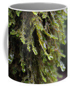 Wet Redwood Branches Coffee Mug