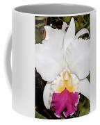 White And Purple Cattleya Orchid Coffee Mug
