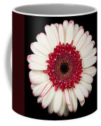 White And Red Gerbera Daisy Coffee Mug