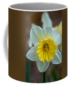 White And Yellow Daffodil Coffee Mug