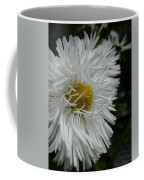 White Bachelor Buttons Coffee Mug