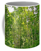 White Birch Along Rivier Du Nord Trail In The Laurentians-qc Coffee Mug
