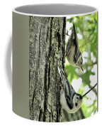 White Breasted Nuthatches Coffee Mug