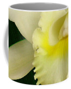White Cattleya Orchid Coffee Mug by James Temple