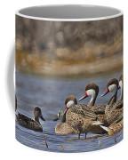White-cheeked Pintails Coffee Mug