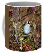 White Crowned Sparrow Coffee Mug
