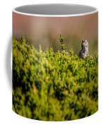White-crowned Sparrow In A Bush Coffee Mug