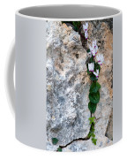 White Cyclamen Flowers Coffee Mug