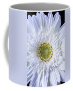 White Daisy Close Up Coffee Mug