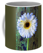 White Daisy With Green Wall Coffee Mug