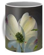 White Dogwood Blooms Series Photo K Coffee Mug