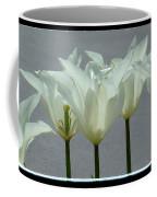 White Early Dawn Tulips Black Border Coffee Mug