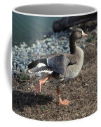 White Fronted Goose Coffee Mug by Skip Willits