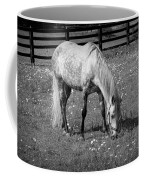 White Horse In A Pasture Among Daisy Flowers Coffee Mug