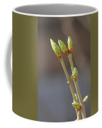 White Lilac Buds Coffee Mug