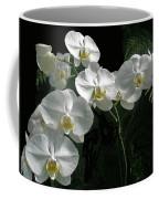 White Moth Orchid Phalaenopsis And Ferns Coffee Mug
