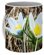 White Pasque Flower Coffee Mug