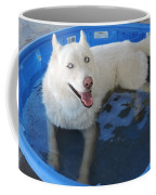 White Siberian Husky In Pool Coffee Mug