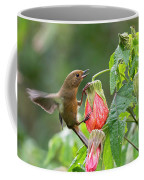 White-sided Flowerpiercer Coffee Mug
