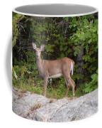 White Tailed Deer Coffee Mug