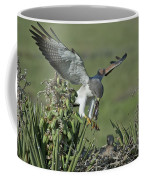 White-tailed Hawk At Nest Coffee Mug